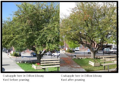 Tree Pruning Tips Dillon Trees Org